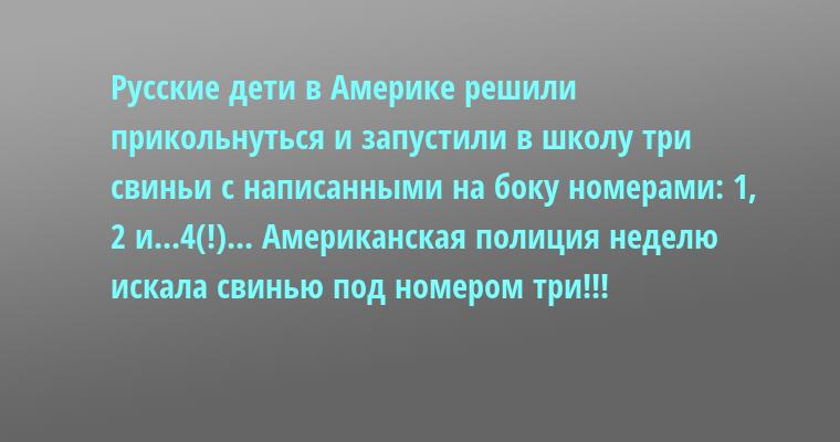 Русские дети в Америке решили прикольнуться и запустили в школу три свиньи с написанными на боку номерами: 1, 2 и...4(!)... Американская полиция неделю искала свинью под номером три!!!